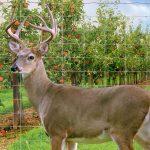 Buying Deer Fence
