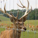 Buying Deer Fence2